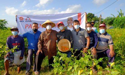 Harga Panen Turun, Wakil Ketua DPRD Jateng Borong Cabai untuk Dibagikan Gratis